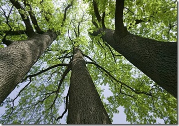 Waren einmal drei bäume die standen auf einem hügel mitten in