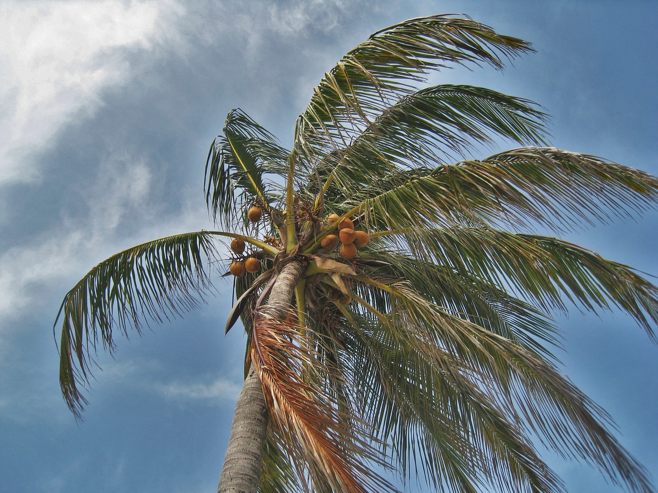 palm-tree-in-the-storm-1088921_1280