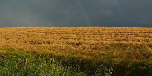 cornfield-1489887_640