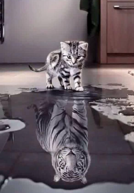 Katze Tiger Veränderung
