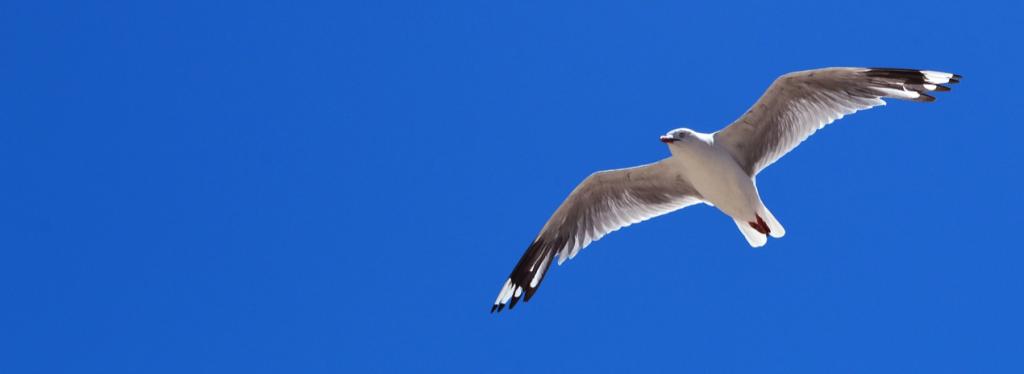Vogel Freiheit