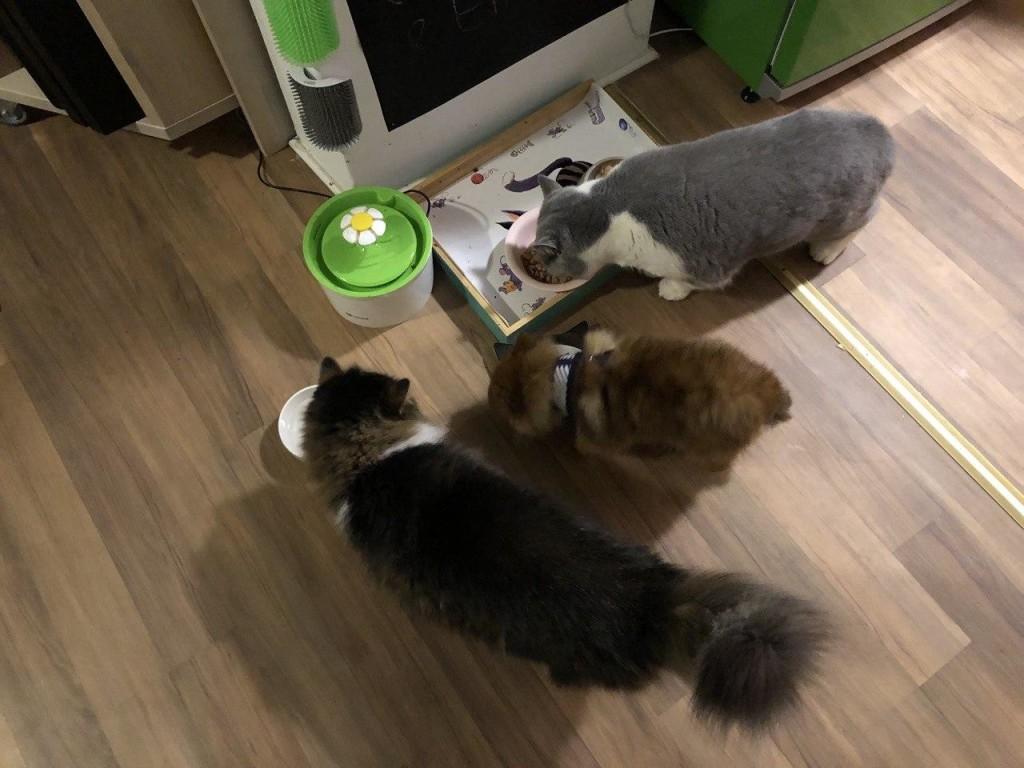 Joshi, Bambi und Emma