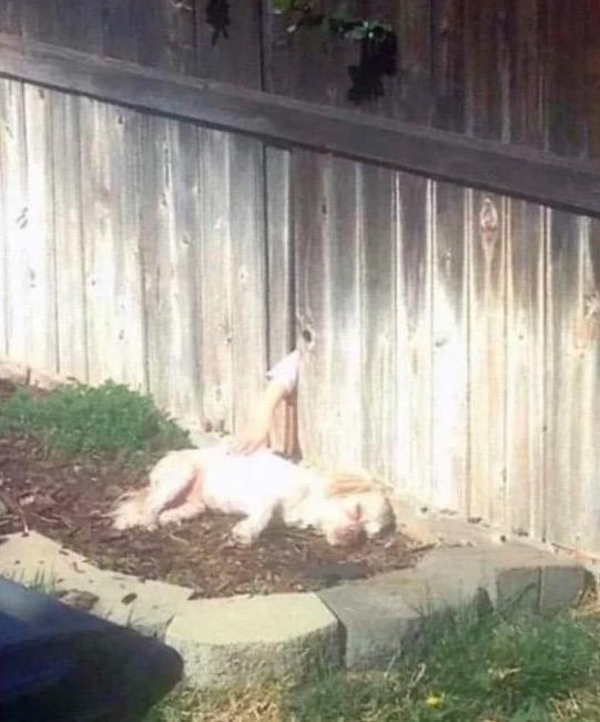 Nachbarshund