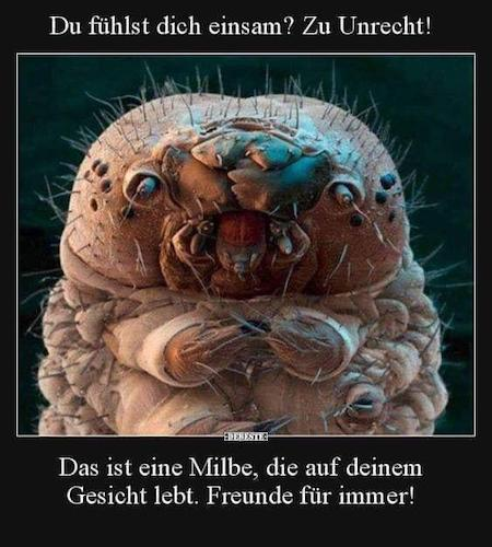 Milbe