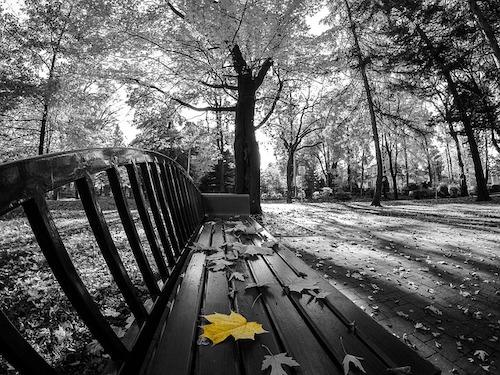 bench_2600108_640